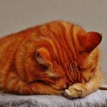 眠りのイメージ画像、眠る猫の写真