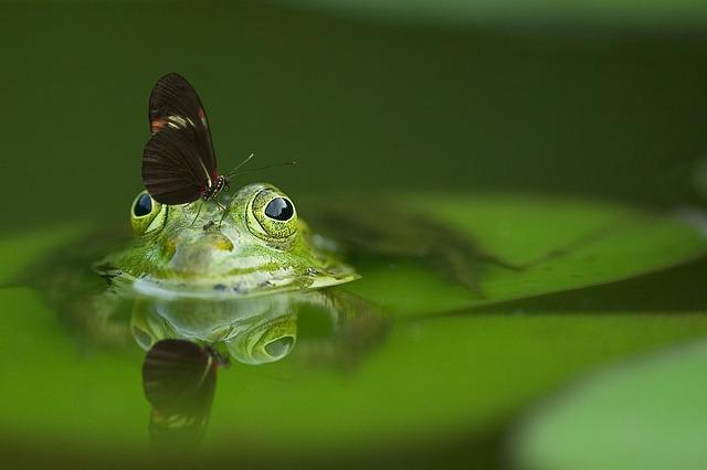 ご機嫌なブジカエルの雑記・コラムのイメージ画像・カエル