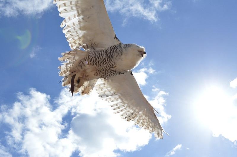 知恵の象徴フクロウのように学んで自由になって大空を飛ぶんだ!のイメージ画像