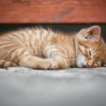 良質な睡眠のイメージ画像