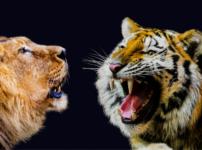 会話する虎とライオン